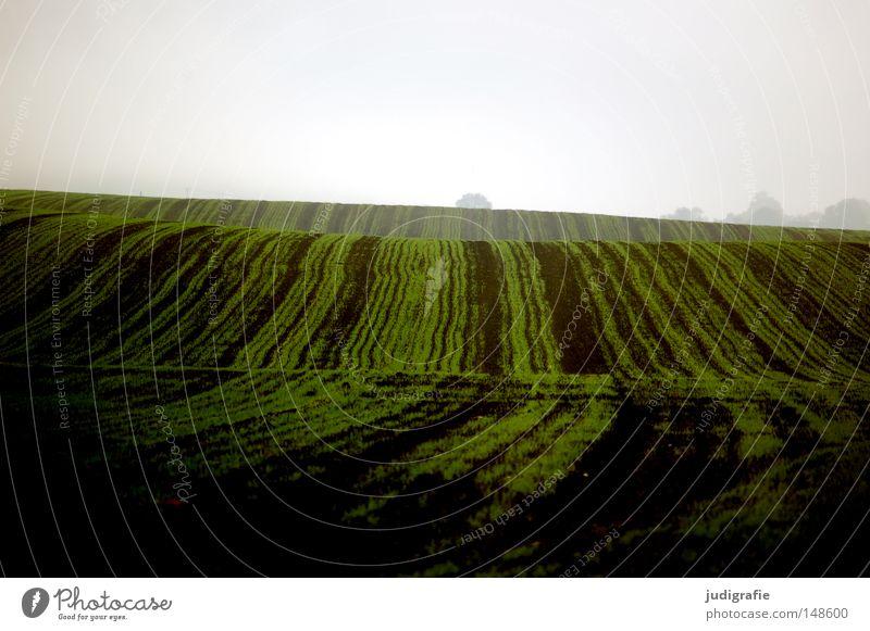 Acker Feld grün Aussaat Ernte Hügel Wellen Linie Landwirtschaft braun Erde Boden Nebel Dunst Herbst Farbe