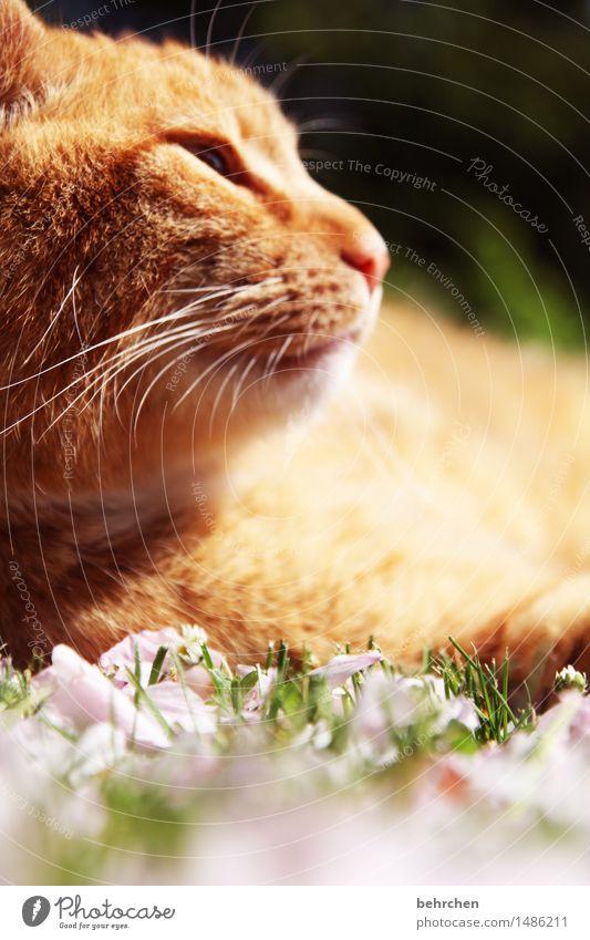 wärme Katze Natur Pflanze schön Sommer Erholung Tier Blüte Frühling Wiese Gras Garten orange träumen Park genießen