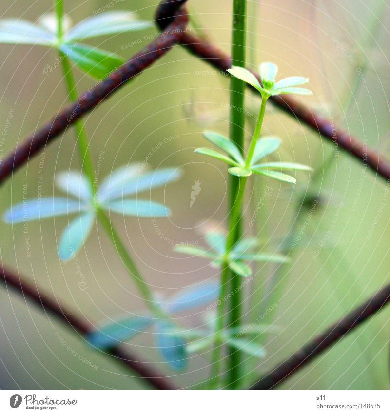 Am Wegrand Natur alt Blume grün blau Pflanze gelb Herbst Wachstum Bodenbelag Rost Jahreszeiten Zaun Barriere herbstlich