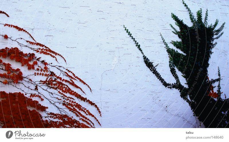 GROW TOGETHER schön weiß grün rot Blatt Herbst Wand Wachstum Jahreszeiten Efeu zusammenwachsen Wilder Wein