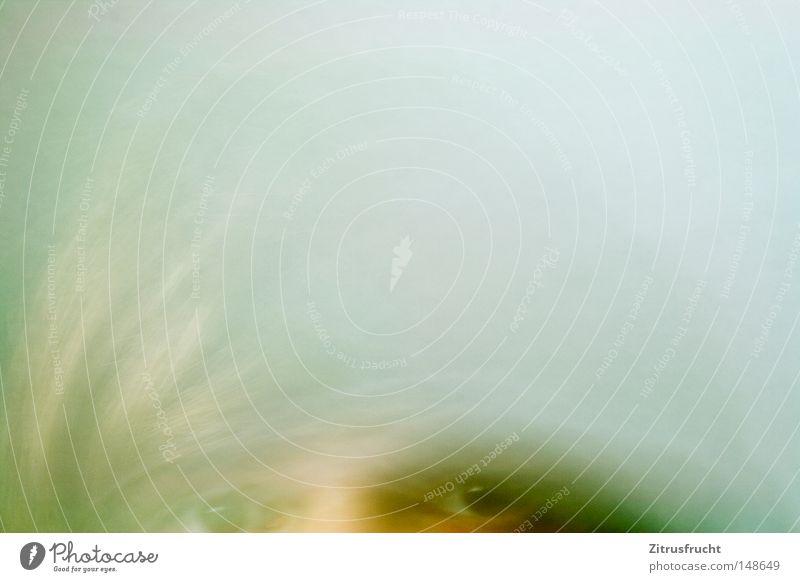 gesichtsmatschepampe grün Farbe Farbstoff Farbenspiel mehrfarbig Farbverlauf gelb grün-gelb weiß Verlauf Unschärfe Auge Blick Glubschauge Haare & Frisuren Kopf