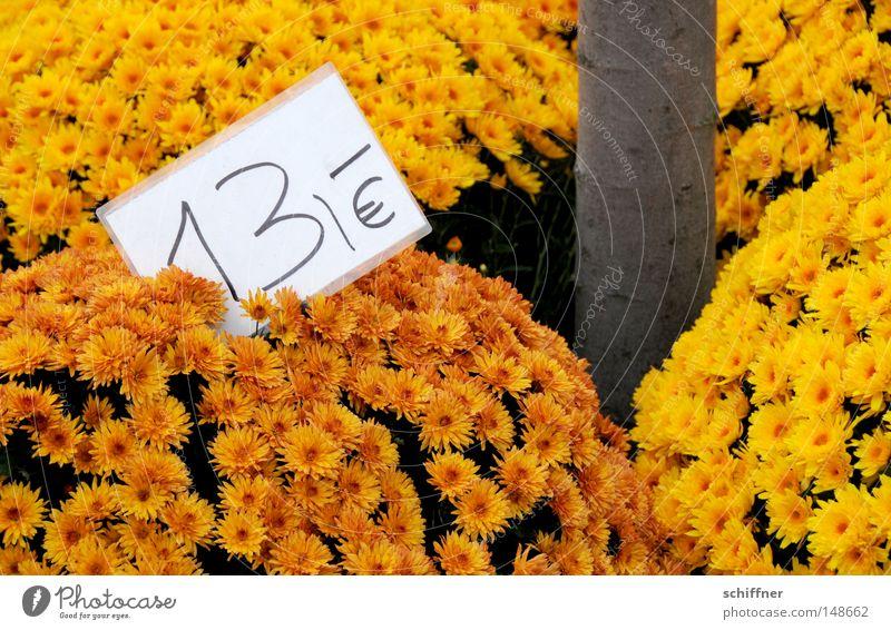 13 öre schön rot Pflanze Blume gelb Herbst Blüte orange ästhetisch Vergänglichkeit zart Blühend Baumstamm verkaufen Markt