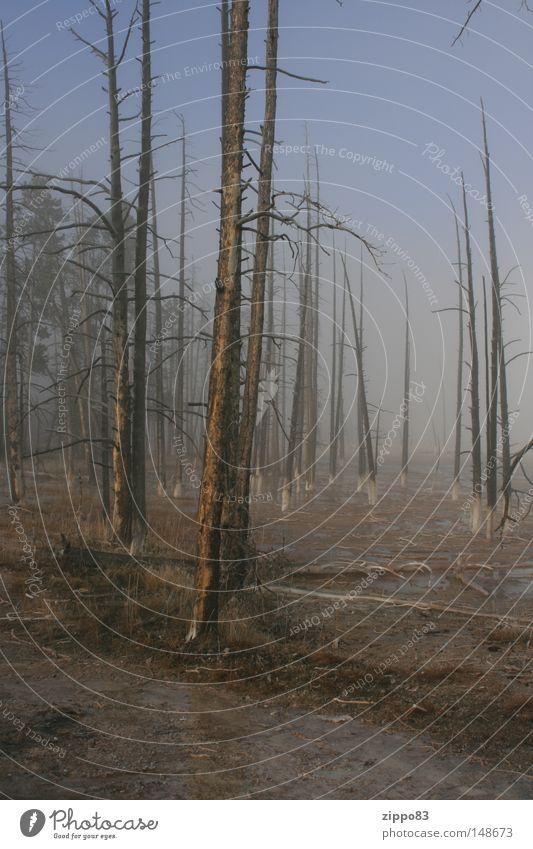 zukunft Zukunft Nebel Herbst September erbe der menschen kranker wald wald im nebel unwiderruflich