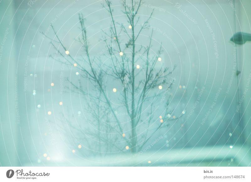 LICHTLEIN FÜR SCHIFFI Weihnachten & Advent Baum Licht blau glänzend Lampe Kitsch hell zart ästhetisch Punkt Himmel