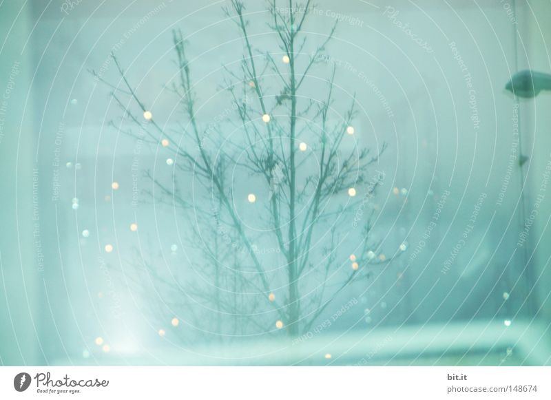 LICHTLEIN FÜR SCHIFFI Weihnachten & Advent Himmel Baum blau Lampe hell glänzend ästhetisch Kitsch Punkt zart