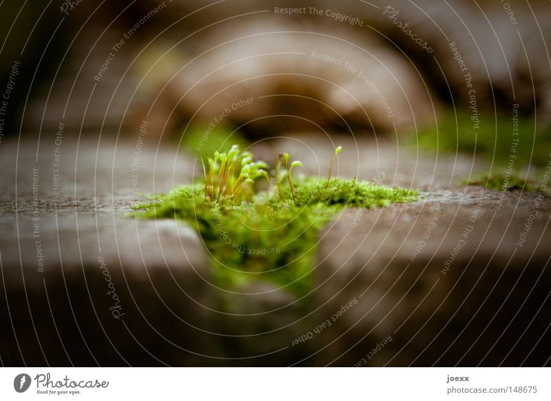 Irisch Moos Natur grün schön Pflanze Blatt ruhig Herbst Mauer Stein Wachstum authentisch Boden weich fantastisch Frieden zart