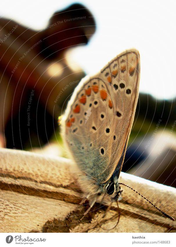 annäherungsversuche Natur schön blau Sommer Tier warten Pause Flügel Schmetterling Wildtier Bläulinge