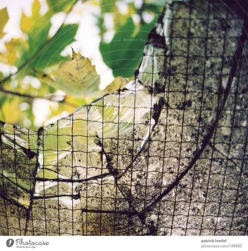[H08.2] Aussicht Natur Blatt dreckig planen Glas Industriefotografie Fabrik kaputt verfallen Loch Riss Zweig Zerstörung Justizvollzugsanstalt Gitter Scherbe