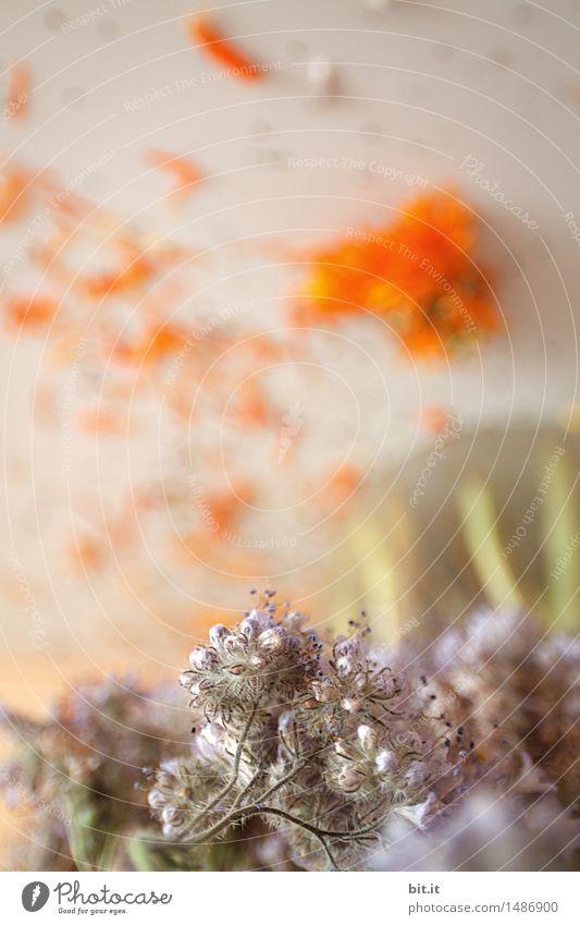 Blumenstrauß Pflanze Blüte verblüht dehydrieren Blumenvase Trockenblume
