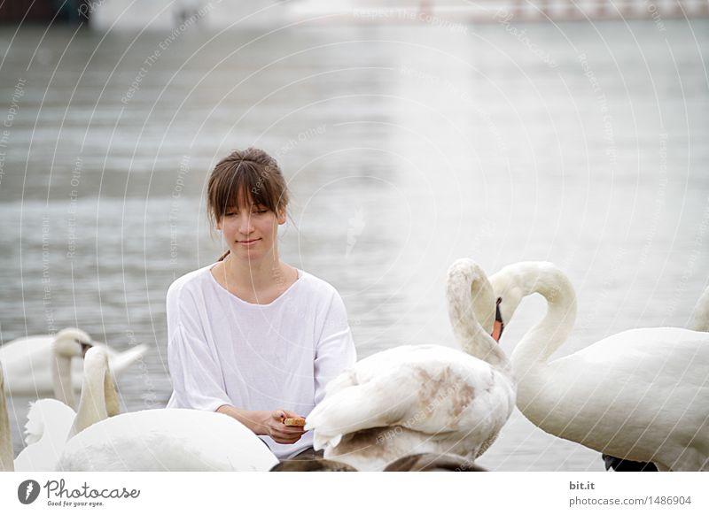 märchen | die wilden Schwäne... Ferien & Urlaub & Reisen feminin Mädchen Junge Frau Jugendliche Kindheit Tier Vogel Schwan Fressen Gefühle Freude Glück