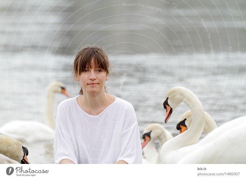 Unter Schwänen Natur Ferien & Urlaub & Reisen Freude Glück Ausflug Lebensfreude Abenteuer Märchen Schwan