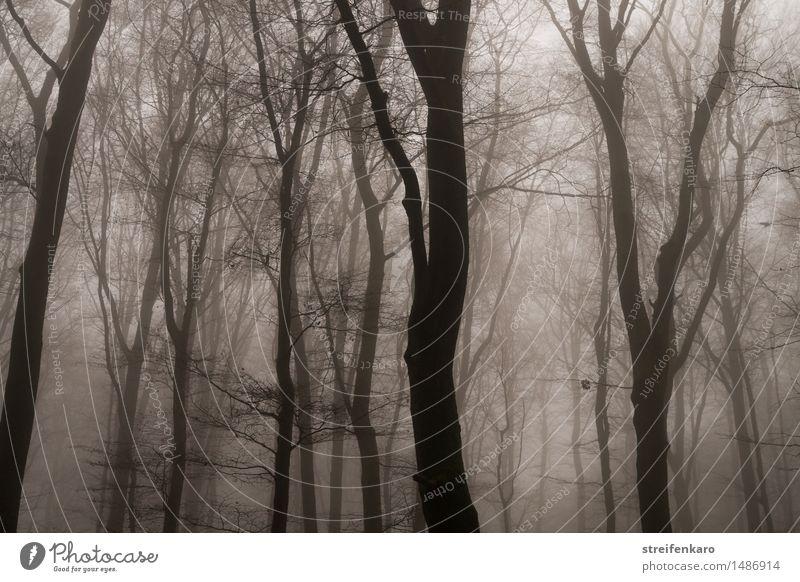 Baumstämme im Nebel Umwelt Natur Landschaft Pflanze Herbst Winter Sträucher Wald bedrohlich dunkel gruselig braun grau Gefühle Stimmung Traurigkeit Trauer