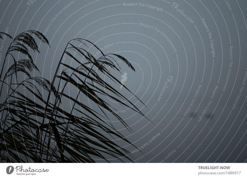 Die graue Lagune 2 Natur Pflanze Wasser Landschaft ruhig Winter dunkel schwarz kalt natürlich Tod See braun Wetter Nebel