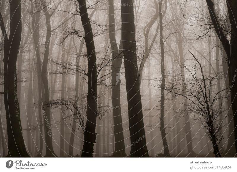 Baumstämme im Nebel Umwelt Natur Landschaft Pflanze Herbst Winter Sträucher Wald bedrohlich dunkel gruselig kalt braun grau Gefühle Stimmung Traurigkeit Trauer