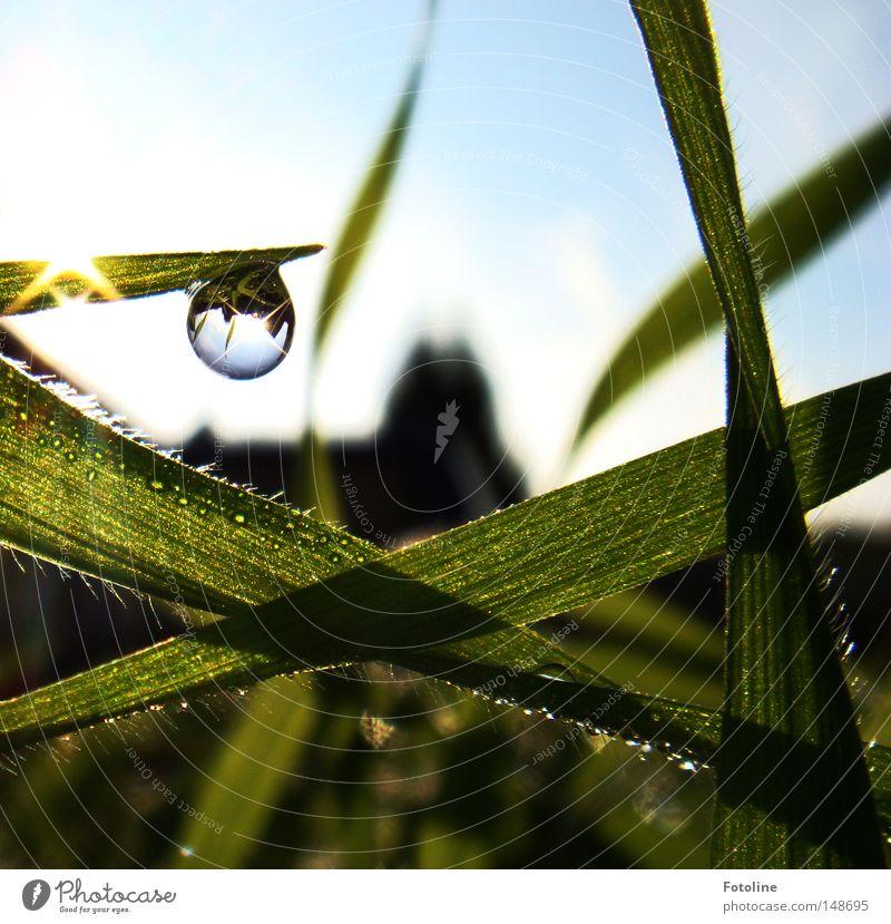 Kleines Universum Wassertropfen Tropfen Wiese Gras Halm Spiegel Reflexion & Spiegelung Sonne Beleuchtung glänzend Himmel Wolken blau grün weiß Haus Frühling