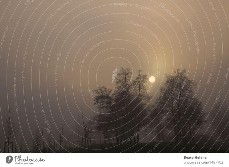 Ton in Ton| Minimal Art Himmel Natur Ferien & Urlaub & Reisen Pflanze Sonne Baum Landschaft Ferne Wald dunkel Umwelt kalt braun Ausflug leuchten Erde