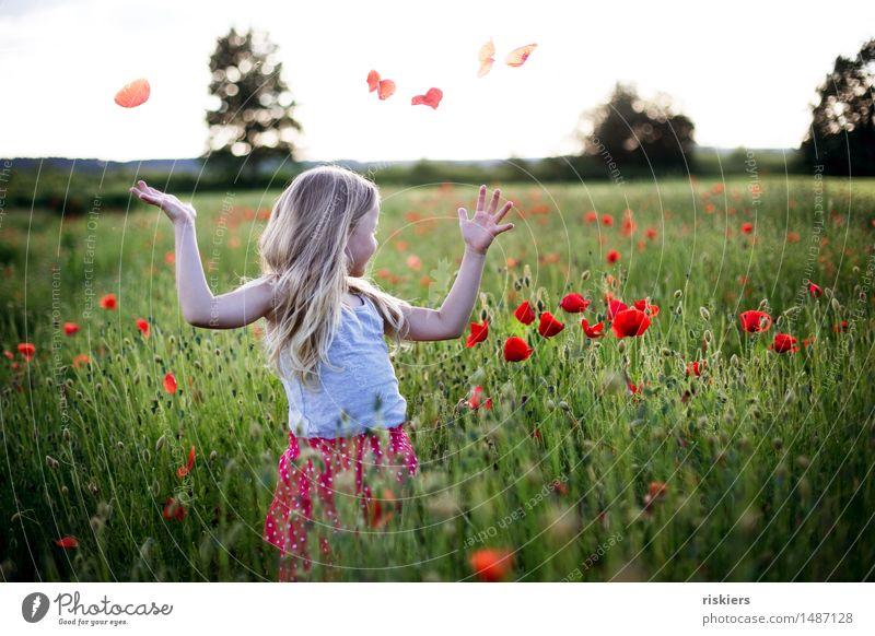 Sommerlaune Mensch Kind grün rot Erholung Mädchen Frühling natürlich feminin Glück leuchten frei Feld blond frisch