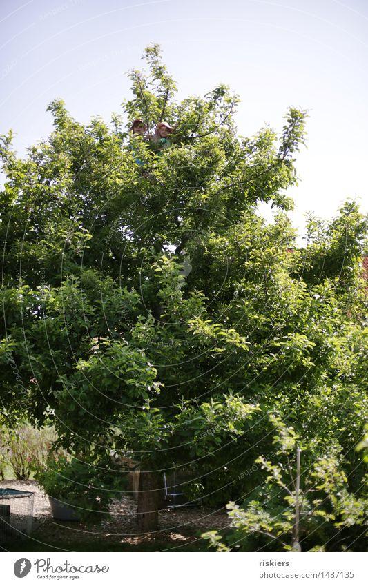 Suchbild Mensch Kind Sommer Sonne Baum Freude Mädchen natürlich feminin Spielen Familie & Verwandtschaft Garten oben Zusammensein frisch Kindheit