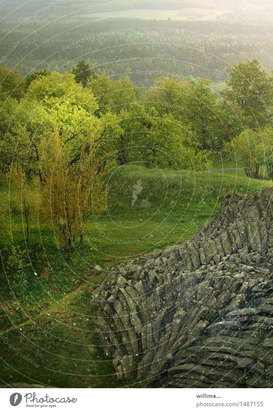 frühlingsschnee Natur grün Landschaft Frühling Schneefall Schneeflocke Mai Mittelgebirge Erzgebirge Basalt