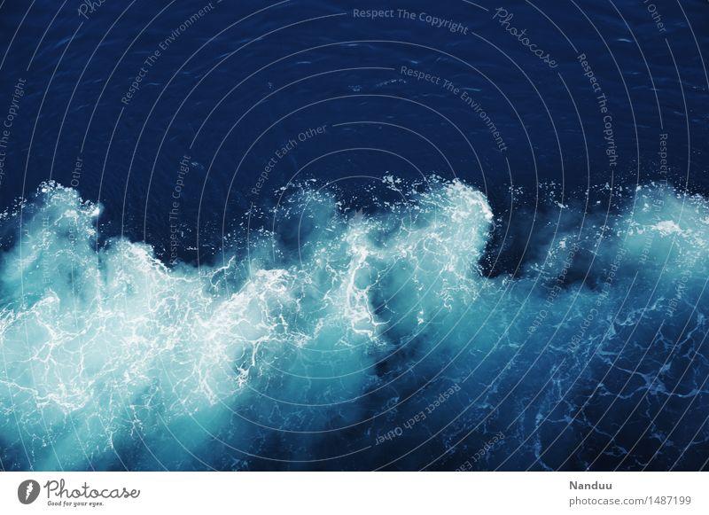 Einhörner machen mich glücklich Natur Sommer Wasser Meer Umwelt Bewegung Wellen Urelemente Klarheit Dynamik Segeln maritim Gischt Kreuzfahrt Golf von Mexico