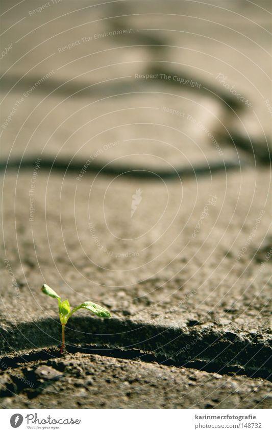 Lebensmut Natur grün Pflanze Gras Freiheit grau Stein Kraft Hoffnung Bodenbelag Zukunft Vertrauen Blühend Mut Leidenschaft