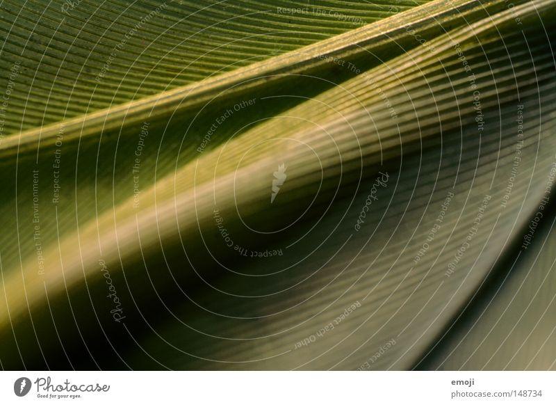 Feder grün Linie Makroaufnahme Stoff Material