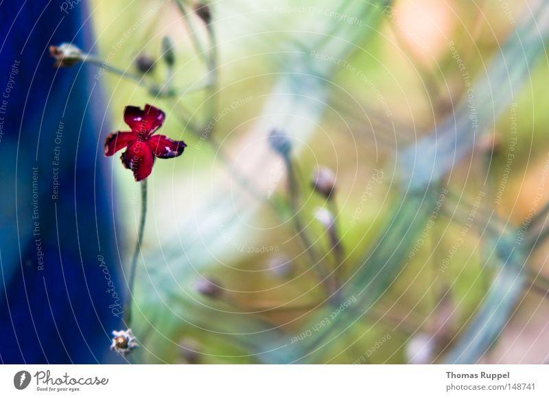 Trostrot Natur Blume blau Pflanze rot Einsamkeit Herbst Blüte Garten Trauer trist Vergänglichkeit Verzweiflung Zaun Gitter Fass