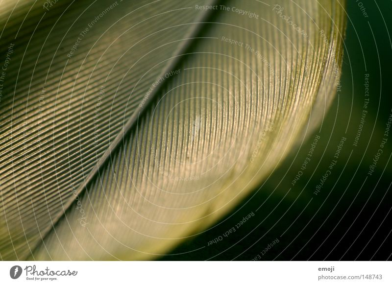 Feder II grün Material Stoff Makroaufnahme Unschärfe Nahaufnahme Linie Strukturen & Formen Detailaufnahme