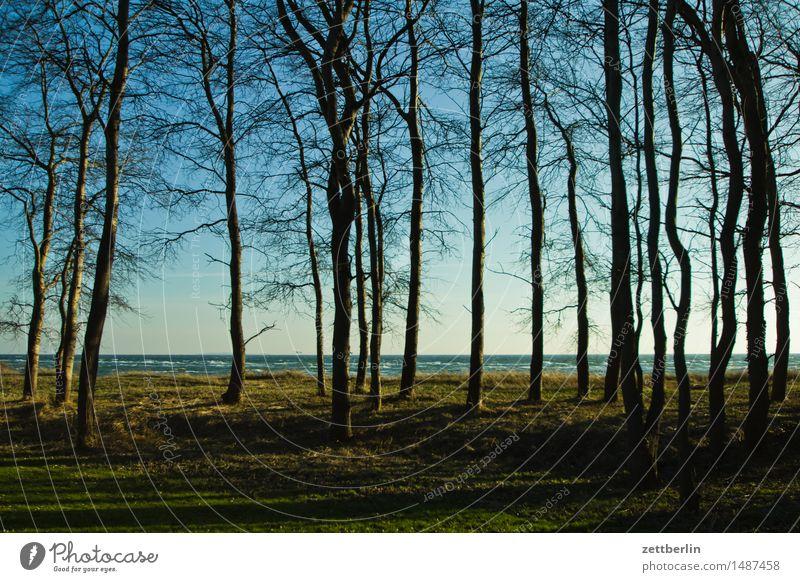 Thiessow Morgen Himmel Horizont Landschaft Mecklenburg-Vorpommern Meer mönchgut Rügen Strand Wasser Wellen Winter Ostsee Perspektive Wald Baum Baumstamm
