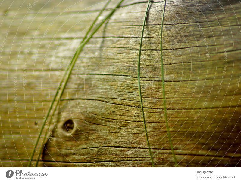 Leise Natur Baum Strand ruhig Farbe Leben Tod Gras Holz Linie Küste Umwelt Baumstamm Darß Weststrand