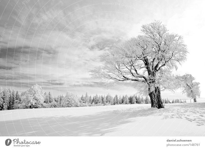 neue Weihnachtskarte 9 Himmel Natur Ferien & Urlaub & Reisen weiß Sonne Baum Einsamkeit Winter kalt Berge u. Gebirge Schnee Hintergrundbild Deutschland Horizont