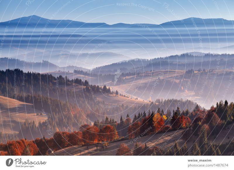 Morgennebel in Bergen. Herbstsonnenaufgang über den Hügeln Himmel Natur Ferien & Urlaub & Reisen Pflanze blau schön Baum rot Landschaft Wald Berge u. Gebirge