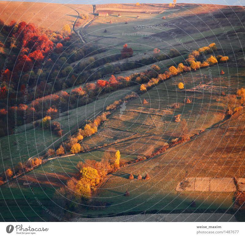 Herbstabend in einem Bergdorf. Sonnenuntergang Licht. Natur Ferien & Urlaub & Reisen grün Baum rot Landschaft Wald Berge u. Gebirge gelb Wiese Gras Garten