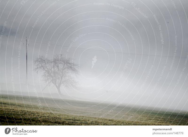 tree in the mist Baum Pflanze Herbst Wiese Traurigkeit braun Feld Nebel nass Europa Landwirtschaft Österreich Obstbaum