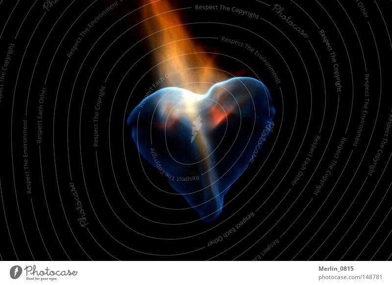 Flammendes Herz blau rot Liebe gelb Herz Brand Feuer Sehnsucht Leidenschaft brennen Lust Flamme anzünden Symbole & Metaphern Desaster