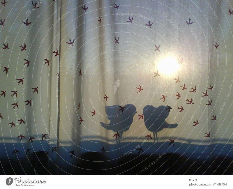 Zweisamkeit schön Sommer Sonne Freude dunkel Fenster Herbst Liebe sprechen Spielen hell Stimmung Vogel Freundschaft Zusammensein ästhetisch