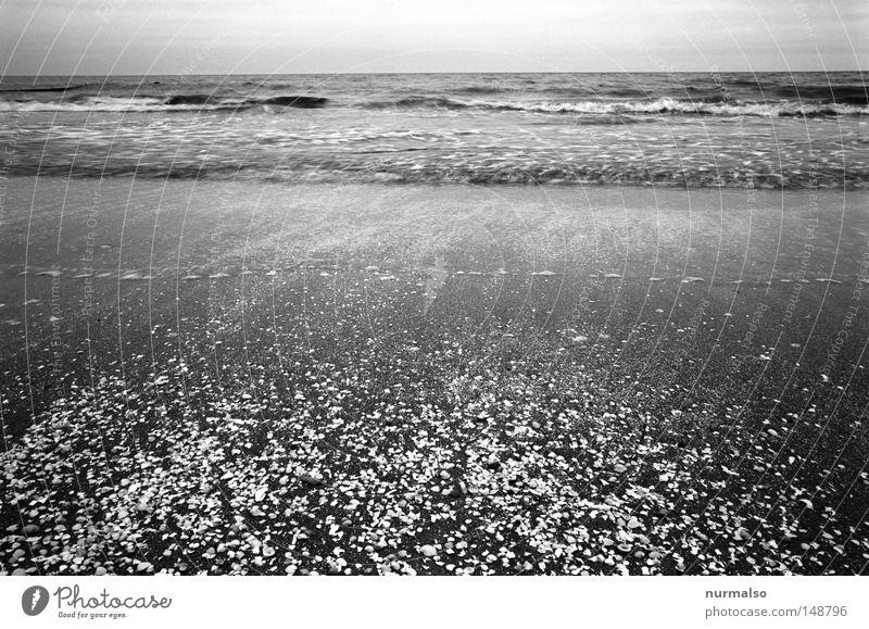 Das Rauschen hören Natur Wasser Meer Winter Strand Ferien & Urlaub & Reisen Ferne Freiheit Sand Wasserfahrzeug Wellen Wind nass frei Horizont Fisch
