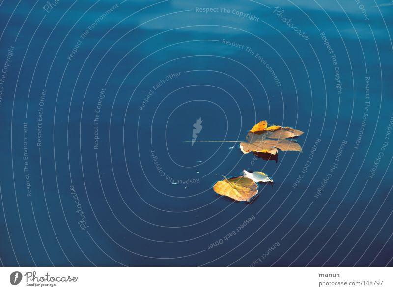 Treibgut Wasser blau ruhig Blatt Einsamkeit gelb Erholung Herbst Tod See Zufriedenheit Stimmung nass Schwimmbad Wandel & Veränderung Gelassenheit