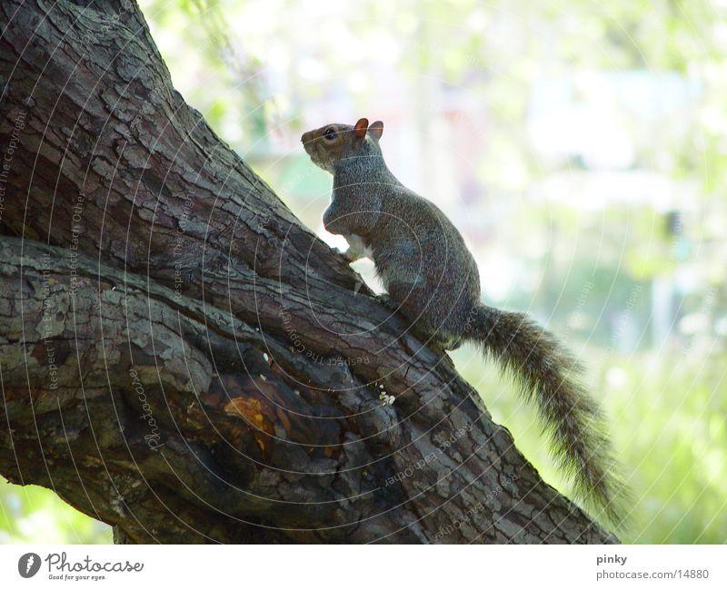 squirrel Natur Baum Zoo Eichhörnchen Nuss Haselnuss