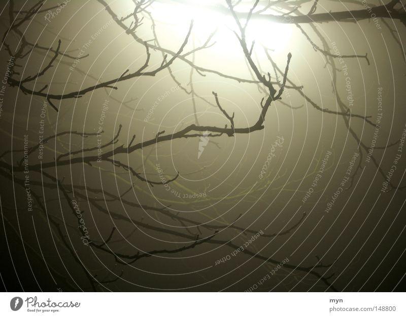 Neujahrsnebel Winter Lampe Natur Herbst Nebel Eis Frost Baum Menschenleer Traurigkeit bedrohlich dunkel gruselig kalt Trauer Einsamkeit Verzweiflung falsch