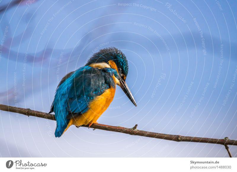 Unten sind die Fische! Umwelt Natur Tier Sonne Baum Küste Seeufer Flussufer Strand Moor Sumpf Teich Bach Wildtier Vogel Tiergesicht Flügel Eisvogel 1 blau braun