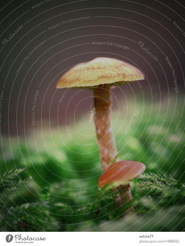 Groß und Klein Natur Pflanze grün ruhig Wald Umwelt Herbst natürlich klein braun Wachstum Erde ästhetisch stehen Perspektive groß
