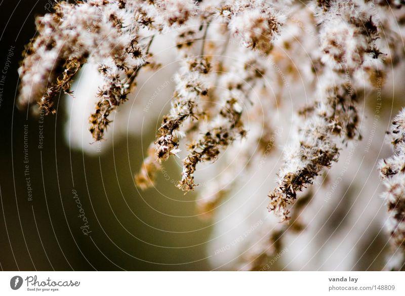 Flauschig Natur grün schön Pflanze Blume ruhig schwarz gelb Herbst Blüte Arme Hintergrundbild gold mehrere weich Frieden