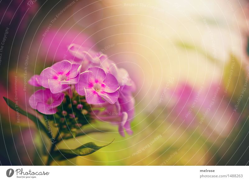 MONTAGS-Gute-Launebild elegant Stil Design Valentinstag Natur Herbst Schönes Wetter Pflanze Blume Blatt Blüte Gartenpflanzen Blütenblatt Blütenknospen