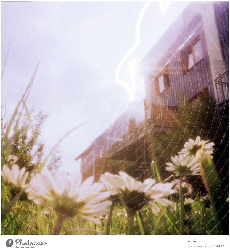 Ant Sneaks A Peek West Himmel Sonne Blume Sommer ruhig Haus Wiese Fenster Gras Garten Beleuchtung Architektur Erfolg Frieden unten