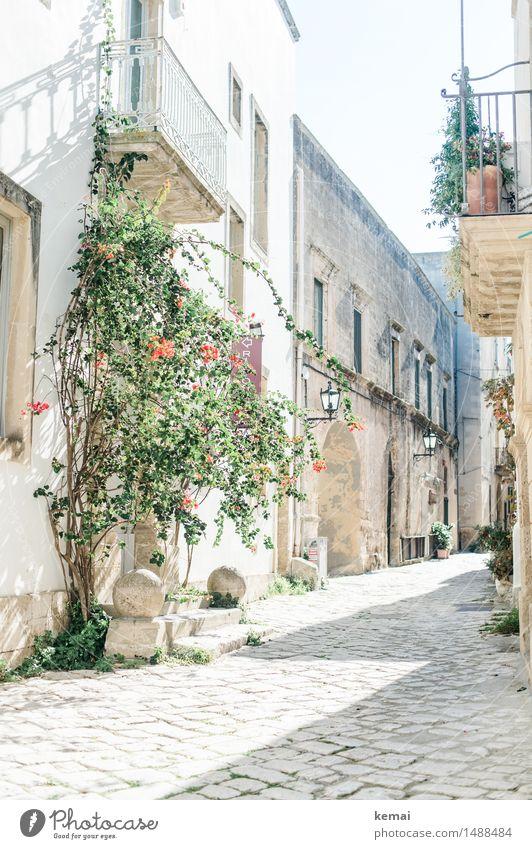 Im Licht Sommer Schönes Wetter Blume Sträucher Italien Apulien Kleinstadt Stadtzentrum Altstadt Menschenleer Haus Einfamilienhaus Mauer Wand Fassade Balkon
