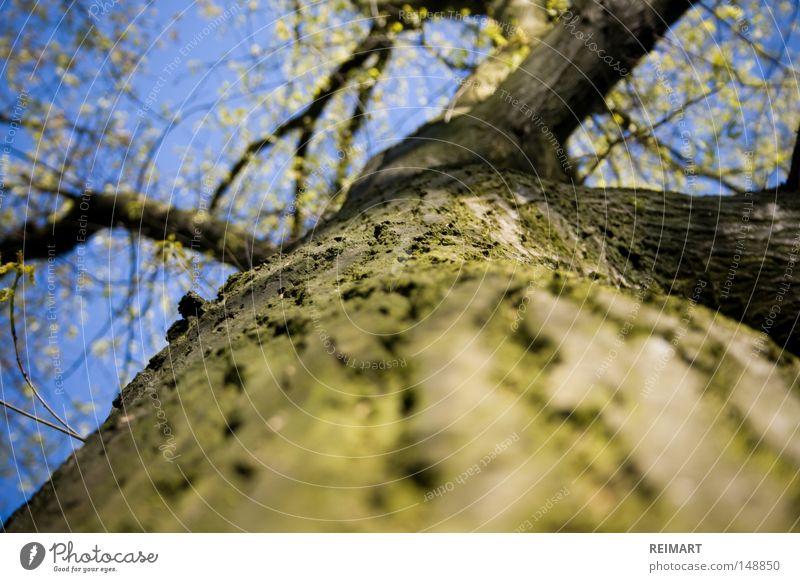 zwölf Baum Himmel Natur Ast blau grün Baumrinde Blatt Frühling