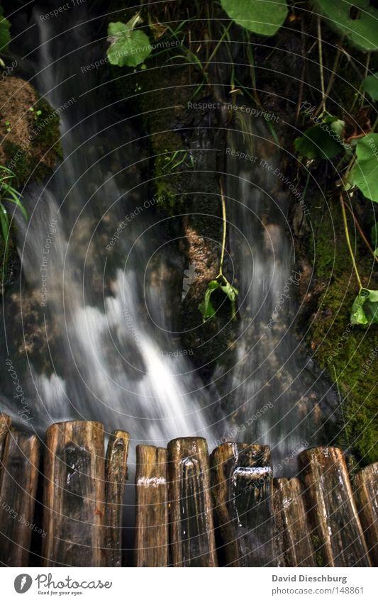 Natur pur Wasser schön Baum grün Blatt Wald dunkel Bewegung Holz Stein Wege & Pfade See Eis Zufriedenheit hell