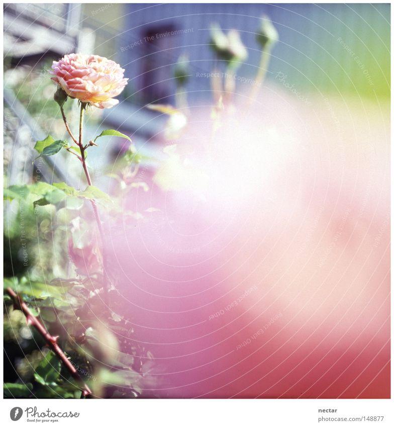 Into every life a little rain must fall blau Sonne Freude Blume ruhig Haus Wiese Fenster Gras Garten Beleuchtung rosa Erfolg Rose Frieden unten