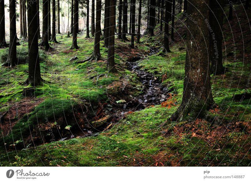 märchenwald Natur Baum Einsamkeit Wald dunkel natürlich nass authentisch Fluss fantastisch Märchen Pilz gruselig Tanne Baumstamm feucht